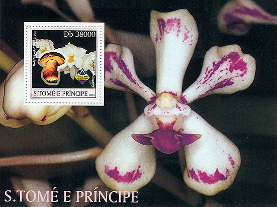 Orchids & Mushrooms - Issue of Sao Tome and Principe postage stamps